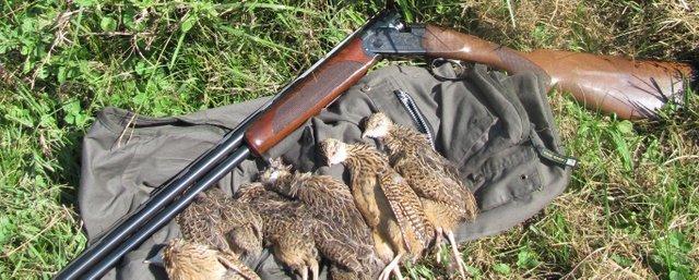 Shotgun with a limit of perdiz in Argentina