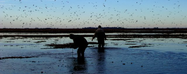 Duck Hunting Argentina - Hunters below a sky Covered with Ducks